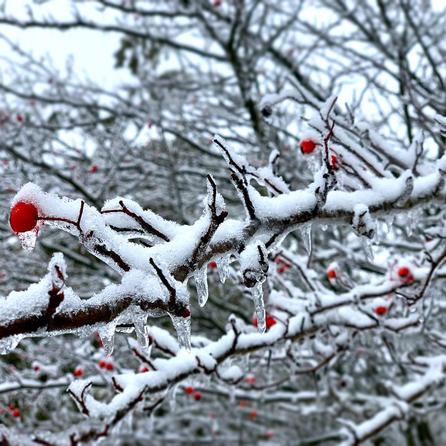 The Good of Goshen • Winter in Goshen
