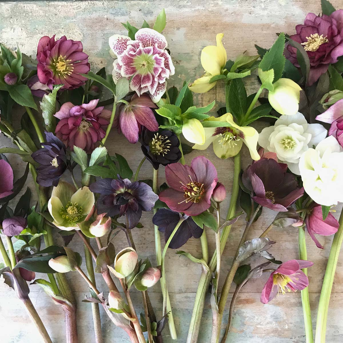Andrea Milne • The Petaled Branch • The Good of Goshen