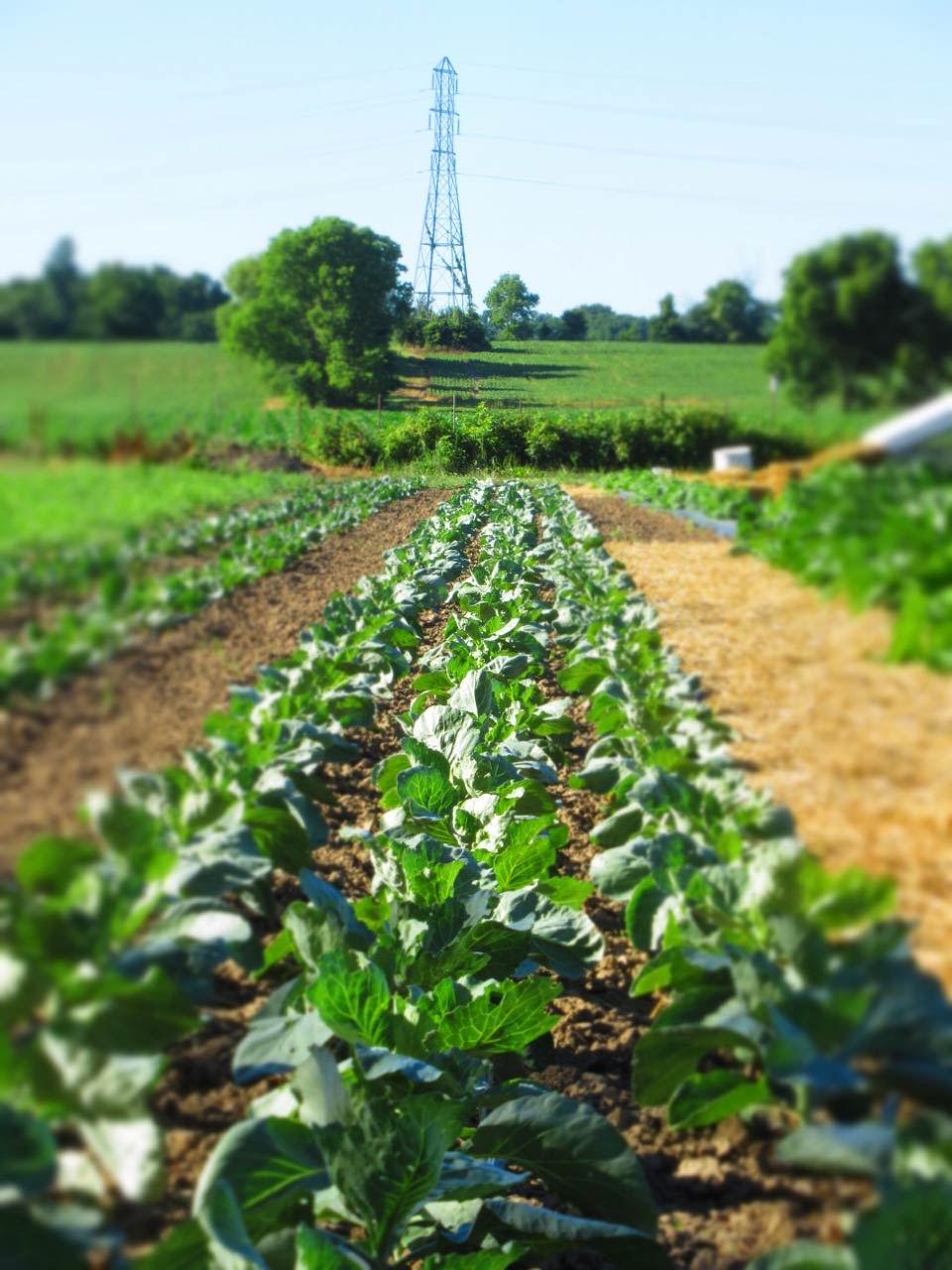 Creekside Farm • The Good of Goshen