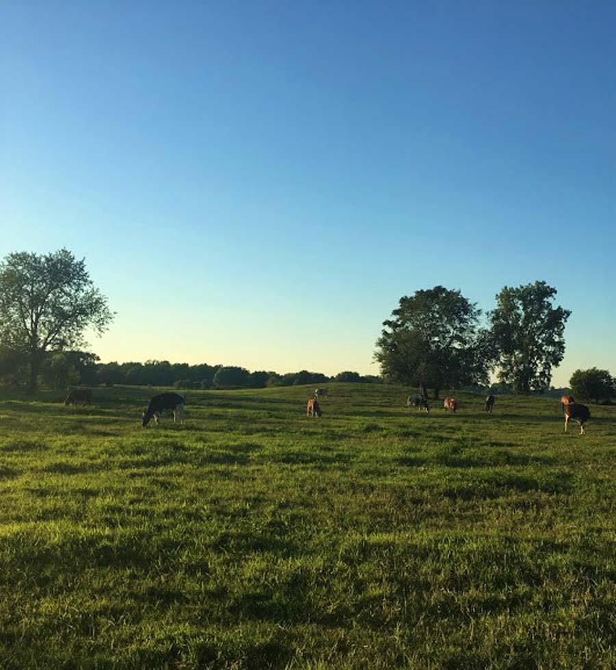 Woodsbrook Farm • The Good of Goshen